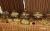 Atlas_Hotel_Shiraz_restaurant_1