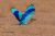 Iran_Bird_Watching_1