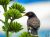 Iran_Bird_Watching_2