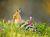 Iran_Bird_Watching_5